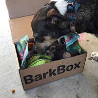 BarkBox uploaded by olive m.