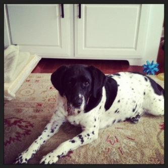 Photo of ASPCA uploaded by Allison M.