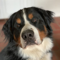 PURINA ONE® Smartblend True Instinct Adult Dog Food uploaded by Kerri M.