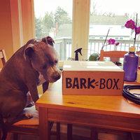 BarkBox uploaded by Eugenia S.