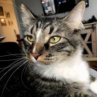 Friskies® Surfin' & Turfin' Favorites Cat Food uploaded by Stephanie B.