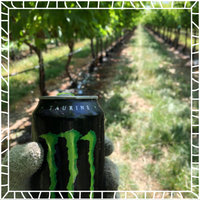 Monster Energy uploaded by Dulce M.