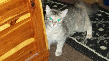 Photo of Pounce Cat Treats uploaded by Jenica G.