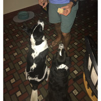 Blue Buffalo BLUETMHealth Bars Dog Biscuit uploaded by Jaime W.