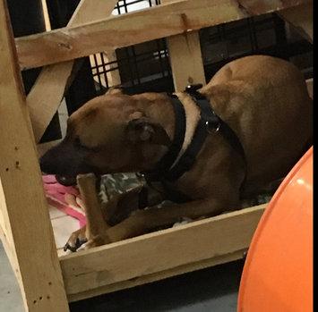 Photo of Nylabone Dura Chew Bone Dog Toy uploaded by Nate W.