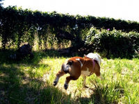 Planet Dog  Hemp Harness/Seatbelt uploaded by Fatima C.