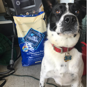 Photo of THE BLUE BUFFALO CO. BLUE™ Life Protection Formula® Chicken and Brown Rice Recipe For Adult Dogs uploaded by Jaime W.