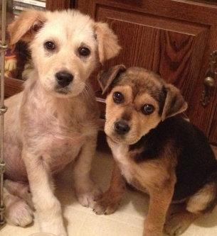 Photo of ASPCA uploaded by Juliet T.