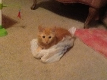Photo of Pounce Cat Treats uploaded by Amanda W.
