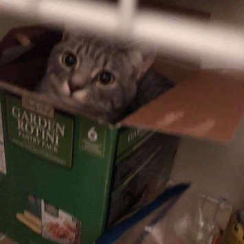 Photo uploaded to #CatLove by Charlotte T.