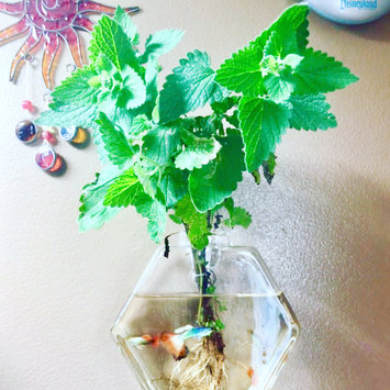 Photo uploaded to #GreenThumb by Jessica B.
