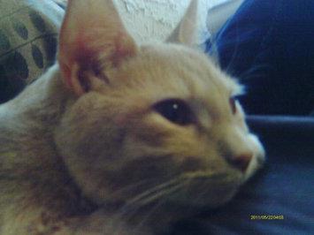 Photo of Pounce Cat Treats uploaded by Amy P.
