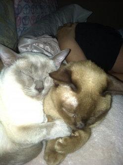 Photo of ASPCA uploaded by Jen D.