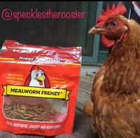 Happy Hen Treats, Mealworm Treat for Pet uploaded by Carlie F.