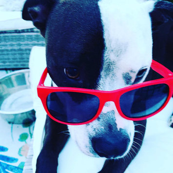 Photo uploaded to #PuppyLove by liz B.