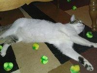Whisker CityA Puffs Catnip uploaded by Rin F.