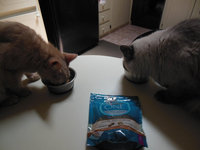 Purina ONE® Dry Food uploaded by cindy s.