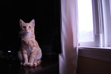Photo of Pounce Cat Treats uploaded by Samantha D.