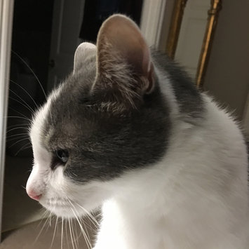 Photo uploaded to #CatLove by Dinah P.