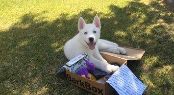 Bark Box image uploaded by Gabriela L.