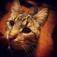 Meow Mix Original Choice Cat Food uploaded by Jessa C.