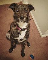 Advantage II Flea & Lice Treatment for Dogs uploaded by Alex C.