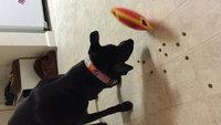 Nina Ottosson Treat Maze Dog Maze - Small uploaded by Shannon Z.