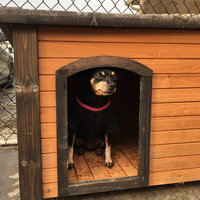 Precision Pet Outback Log Cabin Dog House uploaded by Tanya N.