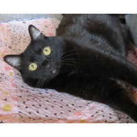 Fresh Step Scoop Away Complete Performance Cat Litter - 34 lb. uploaded by M'leigh A.