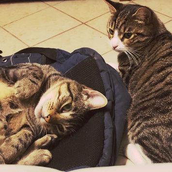 Photo of Petco So Phresh Odor-Lock Crystal Cat Litter, 15 lbs. uploaded by Hope D.