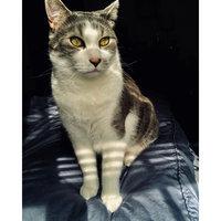 Purina® DentaLife Chicken Dental Cat Treats uploaded by Melissa A.