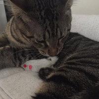 Petmate Softbite Cat Toy, 24-Pack, Fur Mice uploaded by Jennifer M.