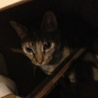 TEMPTATIONS™ Classic Treats For Cats Tasty Chicken Cat Treats uploaded by Chloe H.