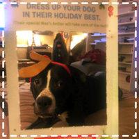 BarkBox uploaded by Mariah S.