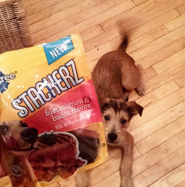 Pedigree® Stackerz® Sticks Filet Mignon & Bacon Flavor Dog Treats