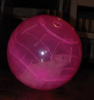 Topdawg Pet Supply Pet Exercise Plastic Hamster Ball with stand uploaded by Megan W.
