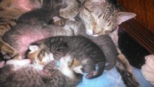Photo of Humane Society  of the United States uploaded by Connie A.