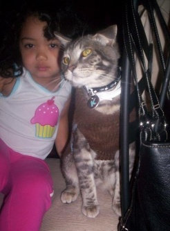 Photo of Friskies  Gravy Sensations Cat Food uploaded by Maritza M.