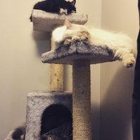 Trixie Pet Products TRIXIE Simona Cat Tree uploaded by Kristen W.