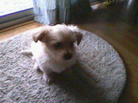 Eukanuba Puppy and Junior Large Breed Food  uploaded by Amber J.