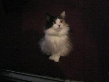 Photo of Pounce Cat Treats uploaded by Crystal N.