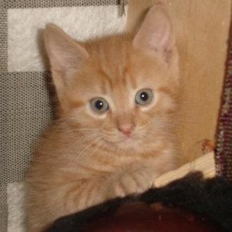 Photo of ASPCA uploaded by Katie S.