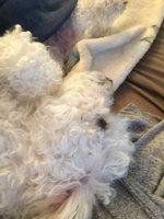 FRONTLINE TRITAK Dog Flea Treatment uploaded by Scarlet R.