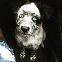 PureBites Freeze Dried Dog Treats uploaded by Chelsea S.