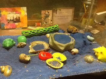 Photo of Mojetto Zoo Med Laboratories SZMHS10 Hermit Crab Sea Sponge uploaded by Alexandria S.