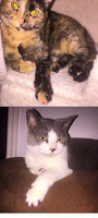 Soft Claws Nail Caps for Cats 40ct uploaded by amy j.