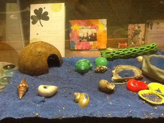 PetProductsPlanet Florida Marine Research SFM20200 6-Pack Coconut Hermit Crab Hideaway uploaded by Alexandria S.