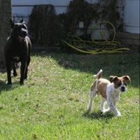 Purina One Smartblend Adult Lamb & Rice Formula uploaded by Rebecca N.