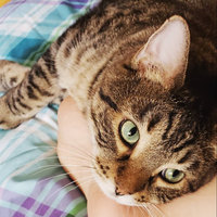 Iams Proactive Health Indoor Weight & Hairball Care Formula uploaded by Brendi H.