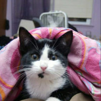 Purina Kitten Chow Nurturing Formula 3.15lb uploaded by Shauna G.